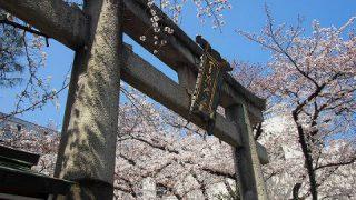 滋賀県大津 天孫神社の桜